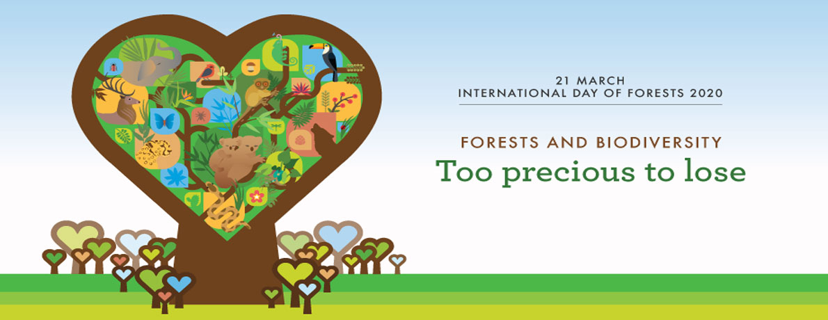 International Day of Forest 2020